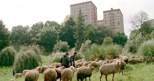4637485_3_466e_une-scene-du-film-portugais-de-miguel-gomes_de0df0871048feb422419a6fadb53f3c