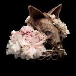A l'avant-garde: Candice Angelini – Cendre