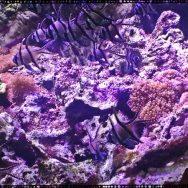 Aquarium tropical du palais de la Porte Dorée: plongée dans les eaux du monde