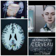La Fabrique du cerveau: quand la frontière entre l'homme et la machine s'estompe ...